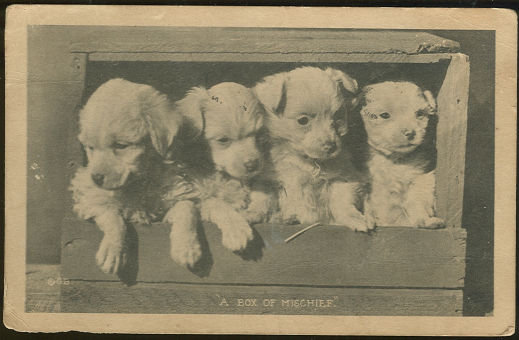 Postcard of Four Puppies, Box of Mischief 1921