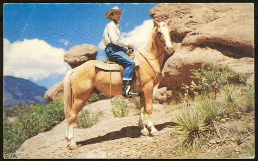 Postcard of Cowboy on Horseback Halted to Survey