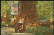 Postcard of World Famous Tree House Redwood California