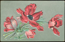 Red Poppies on Silver Background 1912 Floral Postcard