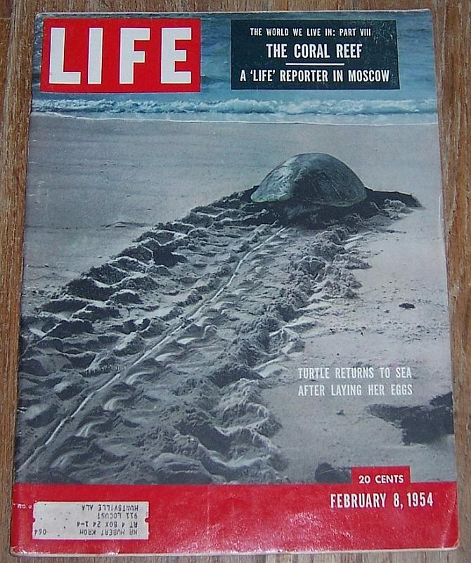 Life Magazine February 8, 1954 Turtle Returns to Sea on Cover/Coral Reefs/Russia
