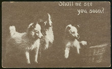 Postcard of Three Puppies Shall We See You Soon