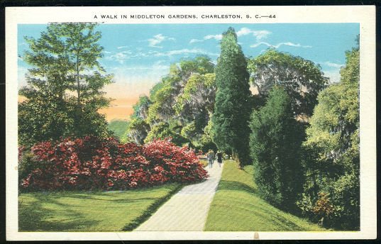 Postcard of Walk in Middleton Gardens, Charleston, South Carolina