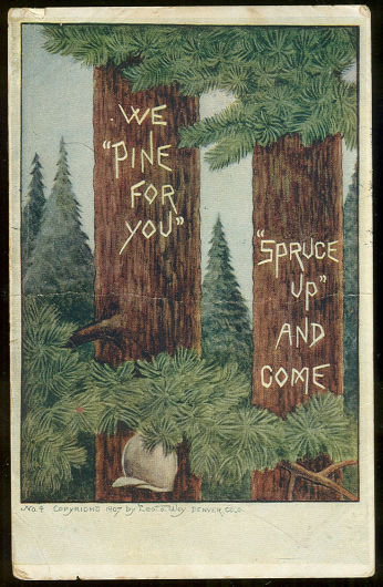 Postcard of Pine Trees, We Pine For You, Spruce Up 1907