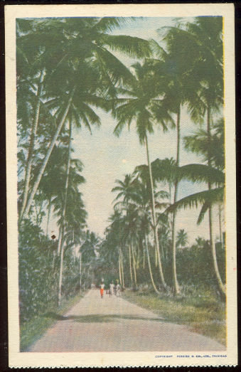 Postcard of Three People on Palm Lined Walk in Trinidad