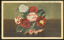 Postcard of Vase of Camellias From Bellingrath Gardens, Mobile, Alabama