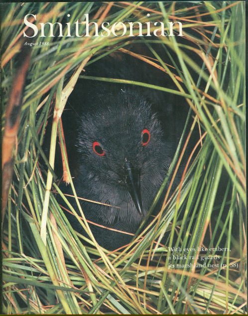 Smithsonian Magazine August 1988 Elusive Rail Bird