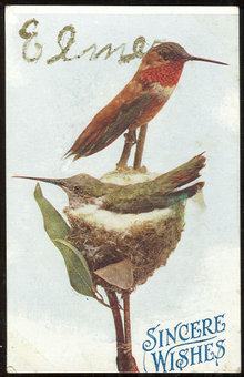 Postcard of Male and Female Bird on Nest Sincere Wishes