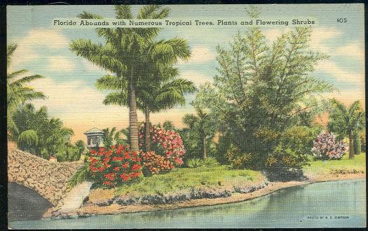 Postcard of Florida's Tropical Trees, Plants and Shrubs