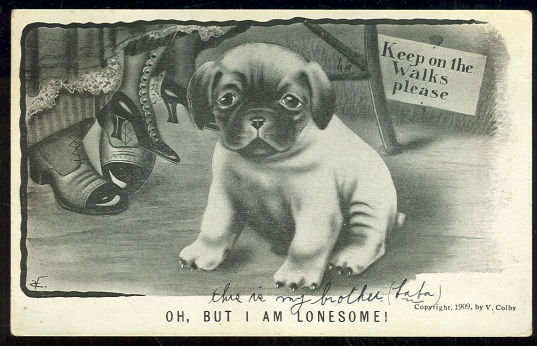 V. Colby Postcard of Lonesome Dog in a Park 1909