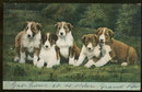 Postcard of Five Cute Brown and White Puppy Dogs 1906