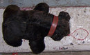Vintage Stuffed Black Bear with Red Collar and Leash