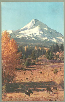 Postcard Mt. Hood Oregon with Balm of Gilead and Cows