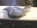 Vintage Snuff Box in the Shape of a Bird
