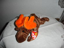 Ty Beanie Baby Moose