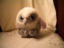 Puffkins Falcon