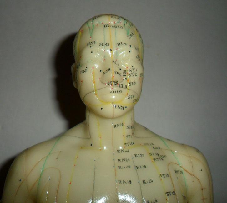 Vintage Acupuncture model in original book Flexible Male on wood stand