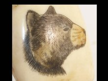 Vintage carved SCRIMSHAW Bear TOOTH on stand