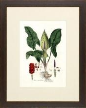 New Print Anonymous Reproduction Framed Flowers Plants Curtis Botanicals R WA-64