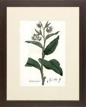 New Print Anonymous Reproduction Framed Flowers Plants Curtis Botanicals R WA-61