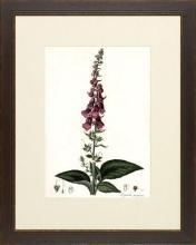 New Print Anonymous Reproduction Framed Flowers Plants Curtis Botanicals R WA-62