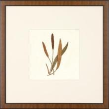 New Print Anonymous Reproduction Framed Flowers Plants Squared Ferns Recta WA-28