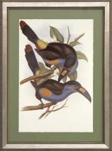 New Print J. Gould H.C. Richeter Reproduction Framed Wildlife Toucans Rec WA-273
