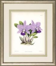 New Print John Nugent Fitch Reproduction Framed Flowers Plants Purple Orc WA-309