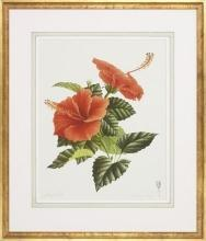 New Floral Botanical Print, Fine Art Giclee Repro, Poppy Flower, Framed