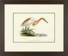 New Print Rev. F.O. Morris Reproduction Framed Sealife Shore Birds Rectan WA-383