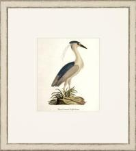 New Print John Abbot Reproduction Framed Wildlife Small Abbot Birds Recta WA-305