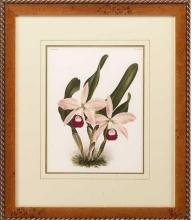 New Print Lucien Linden Reproduction Framed Flowers Plants Lindenia Orchi WA-331