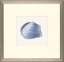 New Print E. Donovan Reproduction Framed Sealife Azure Shells Rectangle WA-211