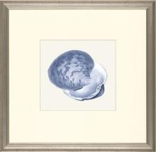 New Print E. Donovan Reproduction Framed Sealife Azure Shells Rectangle WA-210