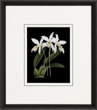 New Print Ignoto Fiammingo Reproduction Framed Flowers Plants Orchids on  WA-262