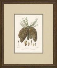 New Print Picart Reproduction Framed Flowers Plants Sylva on North Americ WA-374