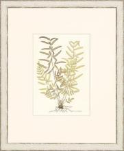 New Print Anonymous Reproduction Framed Flowers Plants Classic Ferns Recta WA-51