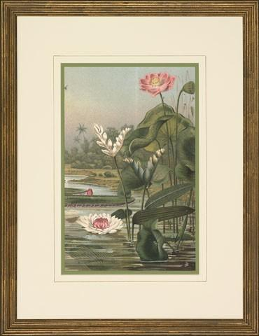 New Print Anonymous Reproduction Framed Flowers Plants Water Lilies Rectan WA-11