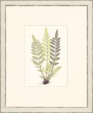 New Print Anonymous Reproduction Framed Flowers Plants Classic Ferns Recta WA-49