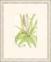 New Print Anonymous Reproduction Framed Flowers Plants Classic Ferns Recta WA-53