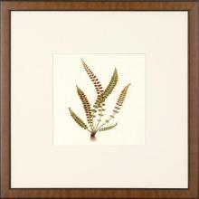 New Print Anonymous Reproduction Framed Flowers Plants Squared Ferns Recta WA-30