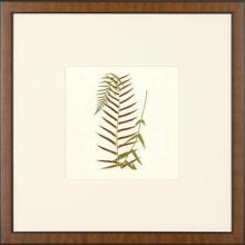 New Print Anonymous Reproduction Framed Flowers Plants Squared Ferns Recta WA-24