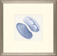 New Print E. Donovan Reproduction Framed Sealife Azure Shells Rectangle WA-212