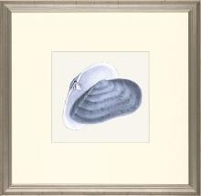 New Print E. Donovan Reproduction Framed Sealife Azure Shells Rectangle WA-207