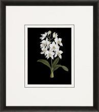 New Print Ignoto Fiammingo Reproduction Framed Flowers Plants Orchids on  WA-264