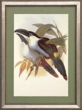 New Print J. Gould H.C. Richeter Reproduction Framed Wildlife Toucans Rec WA-274
