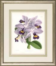 New Print John Nugent Fitch Reproduction Framed Flowers Plants Purple Orc WA-307