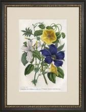 New Print Charles Morren Reproduction Framed Flowers Plants Provence Flow WA-196