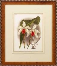 New Print Lucien Linden Reproduction Framed Flowers Plants Lindenia Orchi WA-326