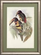 New Print J. Gould H.C. Richeter Reproduction Framed Wildlife Toucans Rec WA-270